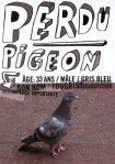 perdu-pigeon01
