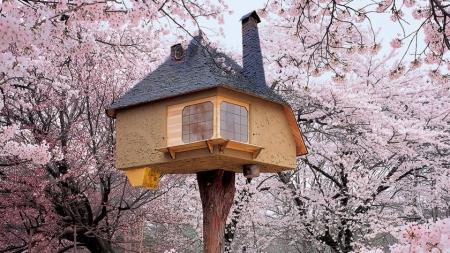 tree houses 1