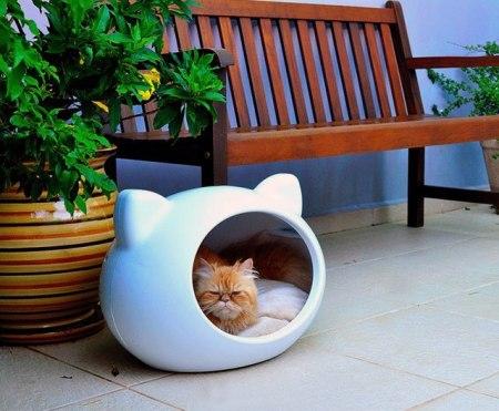 cuccia gatto