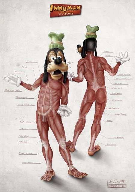 Illustrated-Anatomy-of-Popular-Disney-Characters